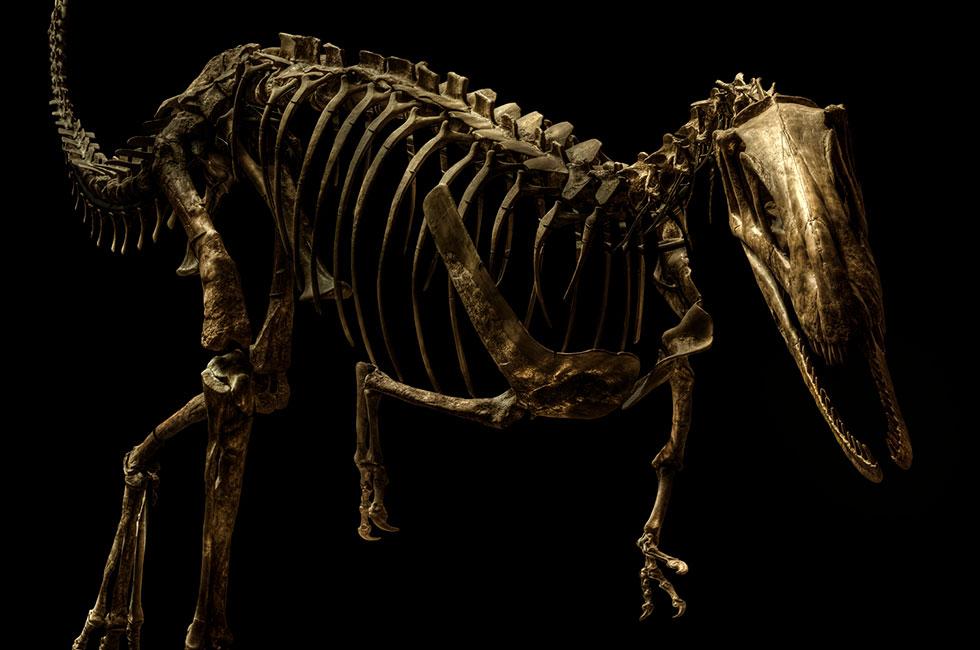 Christian-Voigt-Dysalotosaurus-Lettowvorbecki-Unio
