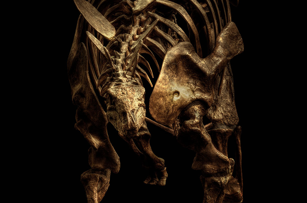 Christian-Voigt-Stegosaurus