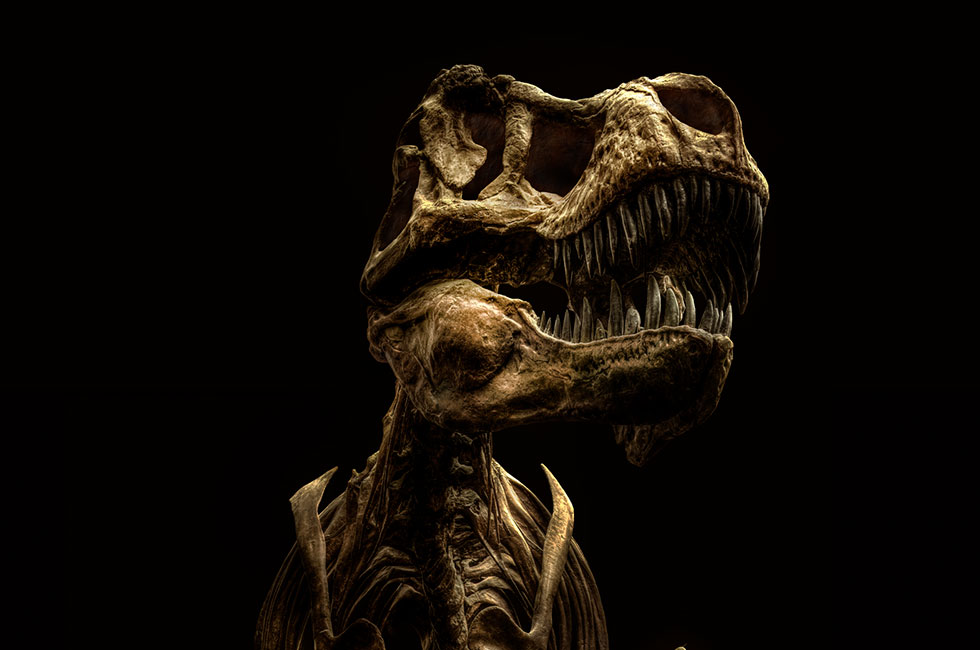 Christian-Voigt-Tyrannosaurus-Rex