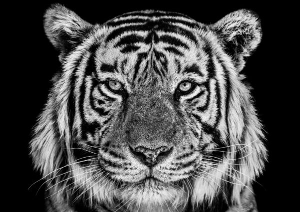 Wildlife fotograaf David Yarrow exposeert in Kunsthuis