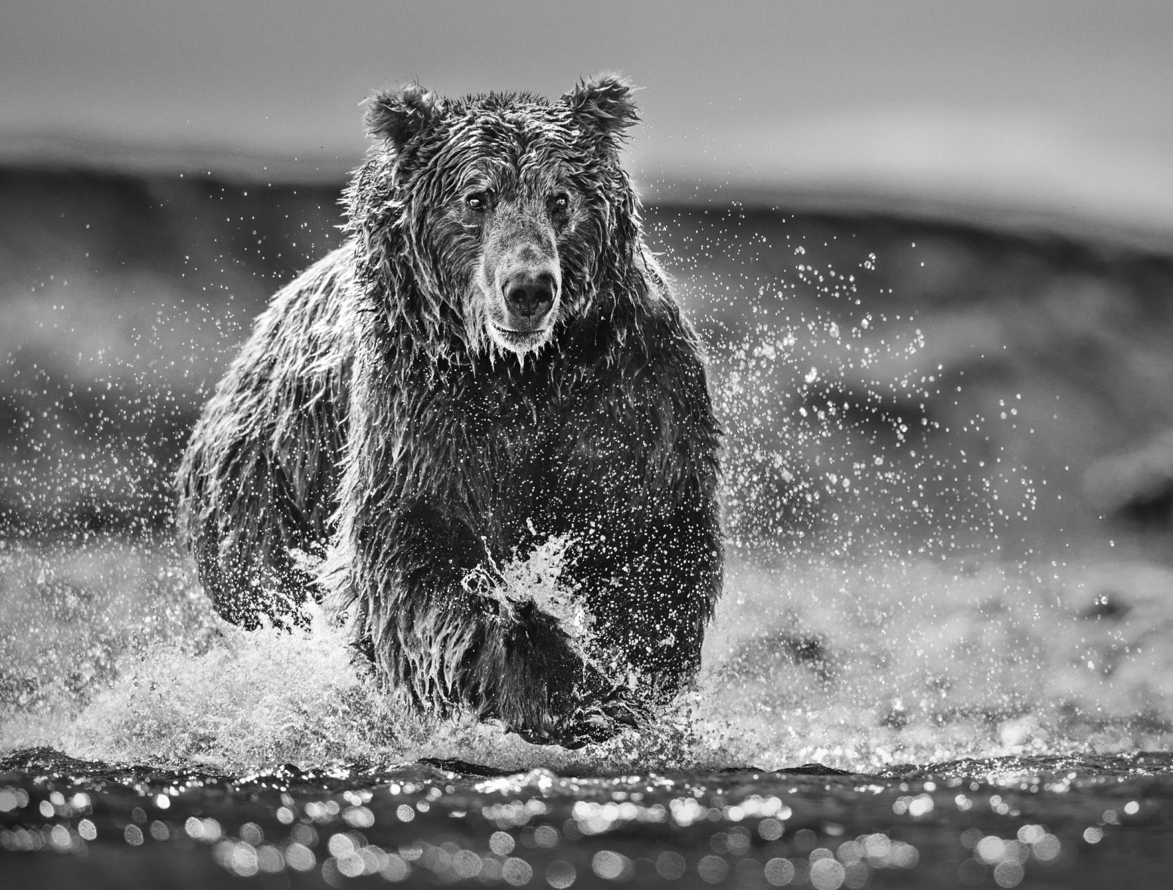 David-Yarrow-The-Happy-Bear