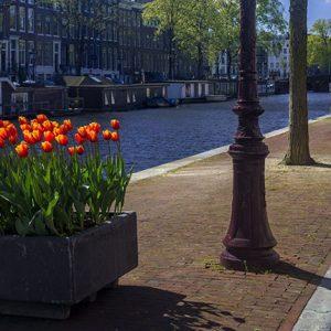 Tulpen Festival